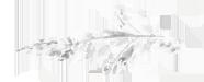 Flora-Flowers-2-1