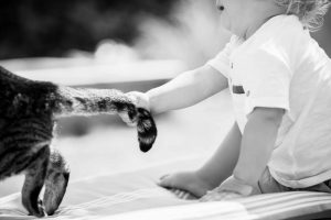 baby boy, cat, black and white image